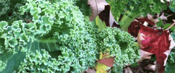 WEBINAR | Kale + Kryptonite